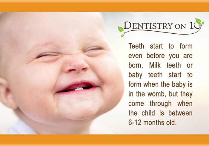 Teeth Start from Even Before You are Born